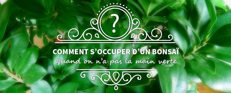 Bonzo le Bonsaï : comment s'occuper d'un Ficus Ginseng quand on n'a pas la main verte?